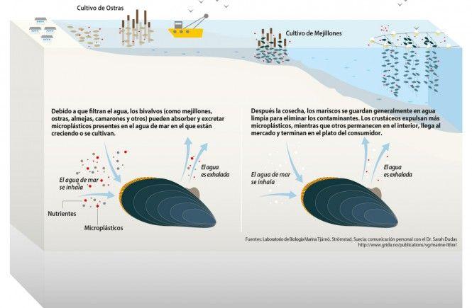 Microplásticos en la Sopa(1)